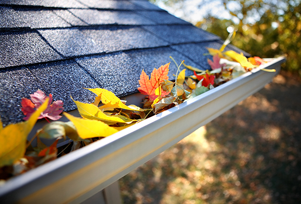 Gutter Maintenance / Cleaning